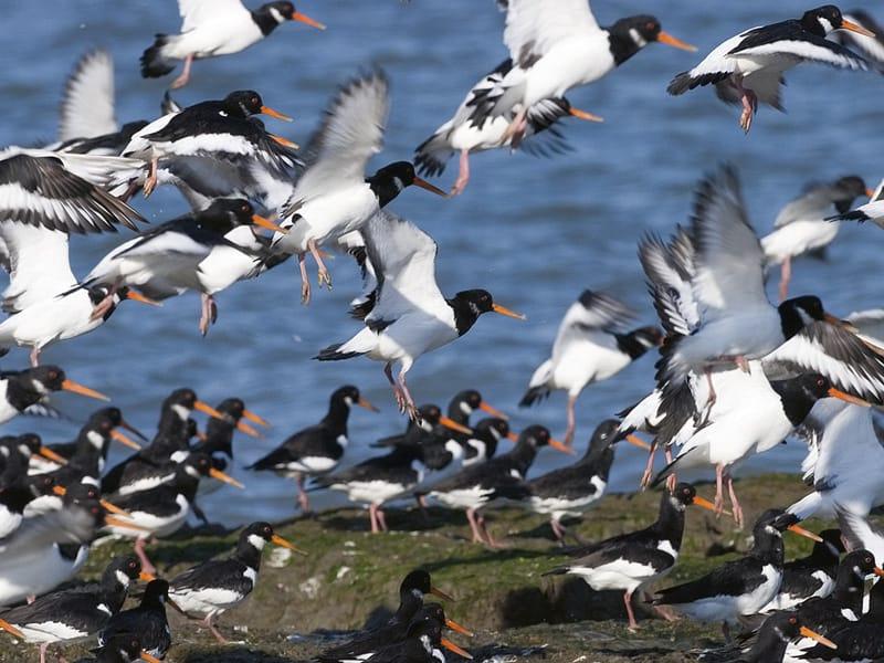 The Wadden Sea HighRes 13229