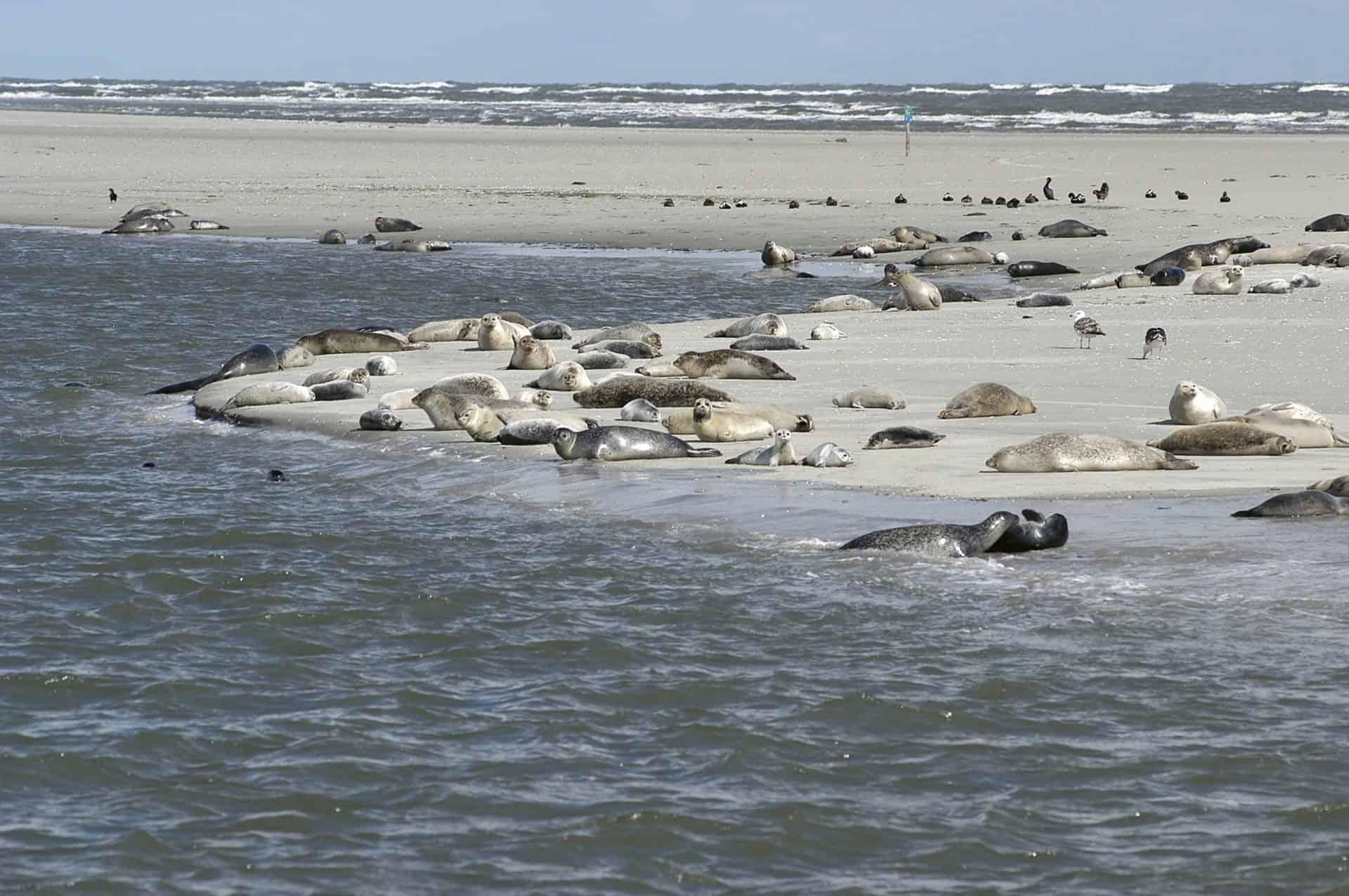 Die Biodiversität des Wattenmeers verdient jeden Schutz